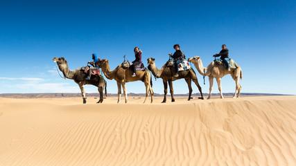 Wall Murals Algeria Friends riding on camels through Sahara desert in Morocco