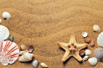 sea shells starfish beach sand holiday summer sunfood shellfish brown from above background