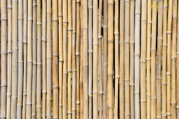 A bamboo pattern and background