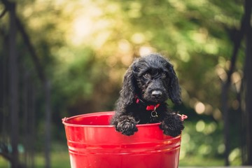 black dog cute pet animal bucket