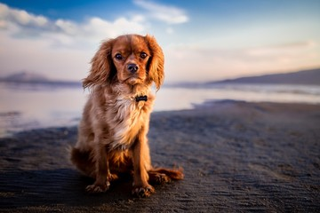 cut dog pet brown animal beach sun friend holiday