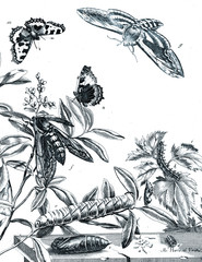 Illustration of insects with flowers.