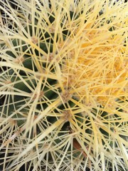 macro view of a prickly cactus