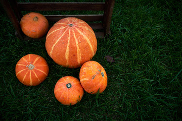 Organic orange pumpkins in the grass. Natural food background.