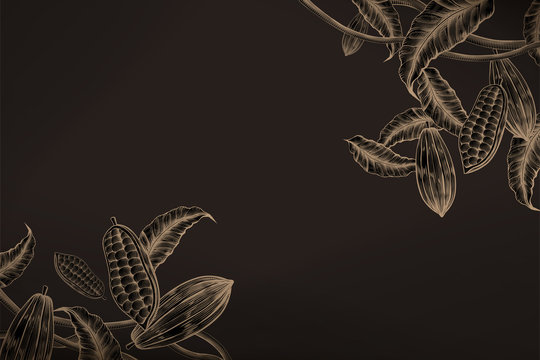Cacao plant background