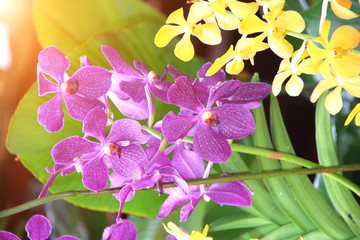 Fototapete - Blurred background with flowers of orchid