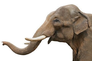 Fotobehang Olifant Head of an elephant, isolated