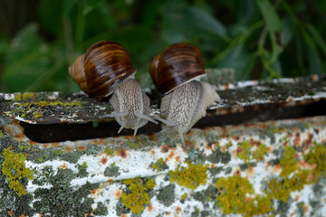 Two large snails are sitting on an old mailbox, waiting for news, humor,macro
