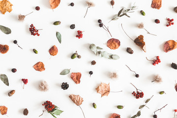 Autumn composition. Pattern made of eucalyptus branches, rose flowers, dried leaves on white background. Autumn, fall concept. Flat lay, top view