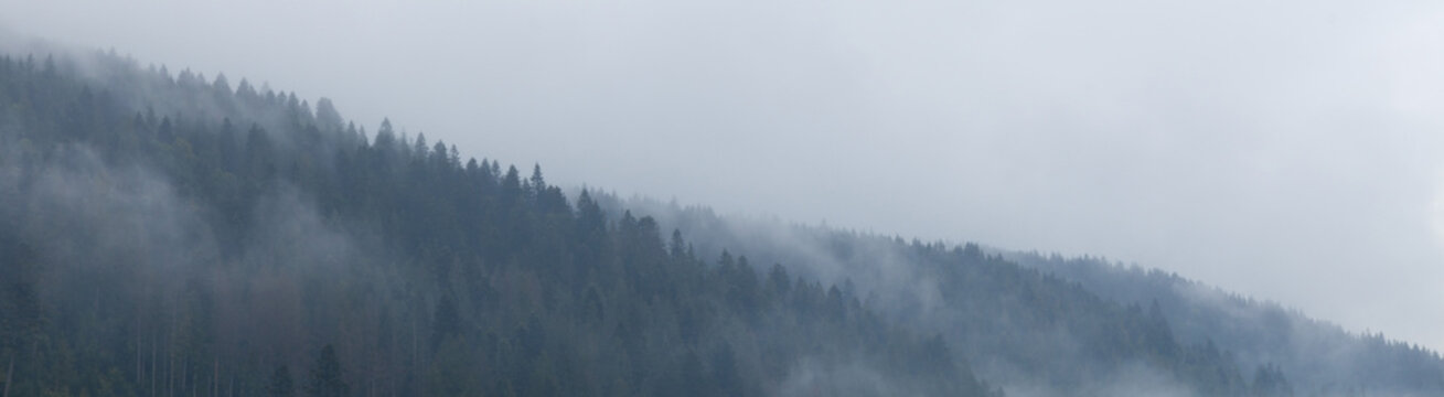 Mountain forest in mist, woods atmosphere. Beautiful ambience wild nature background.