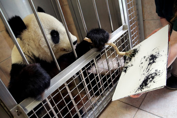 Giant Panda Yang Yang uses finger paint and a brush to create a picture at Schoenbrunn Zoo in Vienna