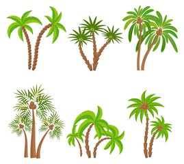 Different palm trees set isolated on white background. Tropical plants vector illustration. Rainforest jungle plants. Summer beach resort decoration