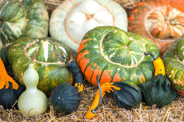 Colorful pumpkins collections and on farmers market for sale. Autumn Season