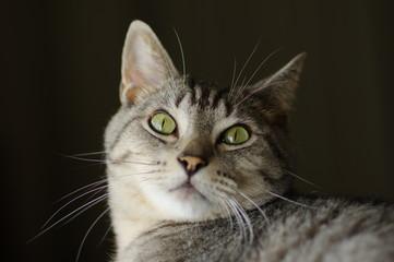 猫と見つめあう