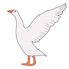 isolated, goose, white background