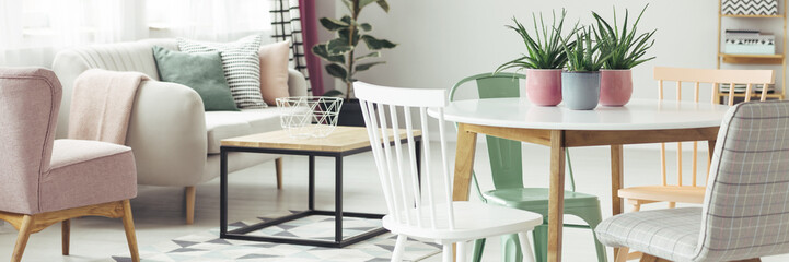 Panorama of plants on dining table in living room interior with couch and pastel chairs. Real photo with blurred background