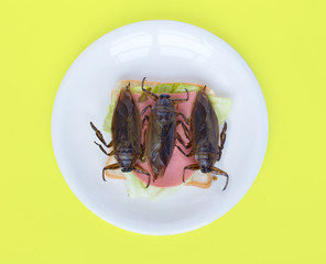 A big beetle on toast on plate. Offer of edible insects - fried cockroach on sandwich toast on yellow background.