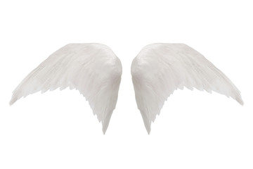 white wings isolated