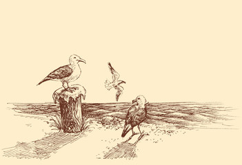 Seagulls on the beach sketch