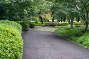 Path in the park, garden