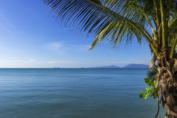 Palme am Maenam beach auf Koh Samui, Thailand