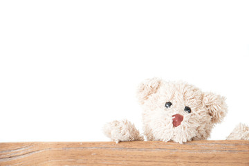 Teddy bear holding on wood with white background ,Happy feel and playful