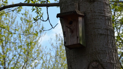 wooden bird house on a tree in forest