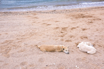 Dogs are chilling