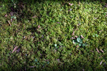 Background mixed mosses, plants, and seeds, horizontal aspect