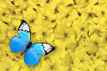 Blue butterfly isolated on yellow background. Beautiful insect.