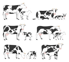 Vector cows and calves