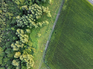 Wall Mural - Countryside dirty road along the agricultural field and green forest. Aerial view from dron