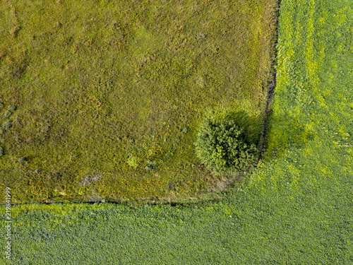 Wall mural Panoramic view from flying drones to agricultural fields with dirty trail and green bush. Top view.