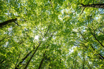 Poster On the ceiling summer road through deciduous green forest