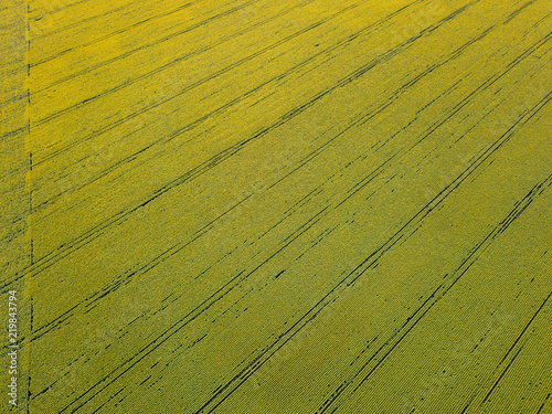 Wall mural Aerial view from the drone to fields with crops in the spring at sunset