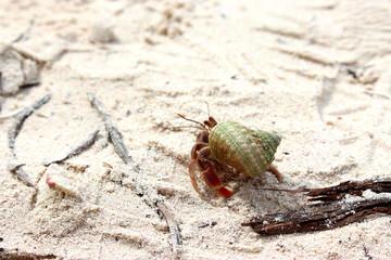 beach crab shell Cuba