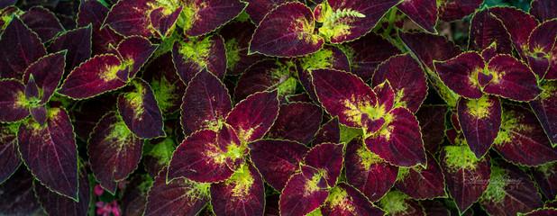 ozdobne rośliny czerwone żółte