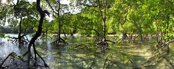 Panorama of a Mangrove forest on Mu Ko Surin Island in Thailand