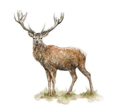 Hand painted artistic watercolor deer illustration isolated on white background