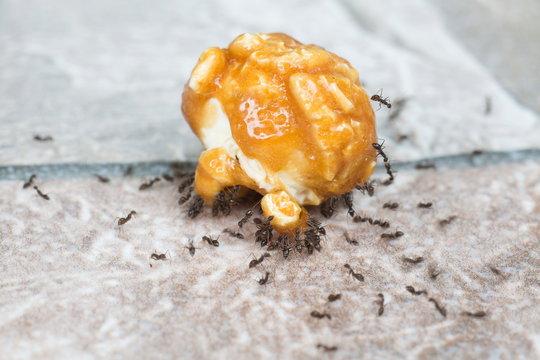 Teamwork concept,Ants eating sugar from popcorn caramel.