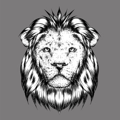 A beautiful lion. Vector illustration for a postcard or a poster, print for clothes.