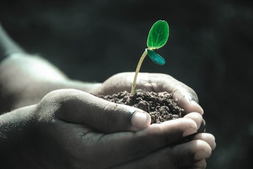 hand plant nature growing hope start black skin africa soil clay leaf