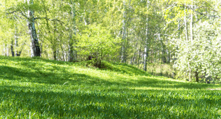 Ground Level View of Summer Plant Lawn and Deciduous Forest with Green Grass on Foreground