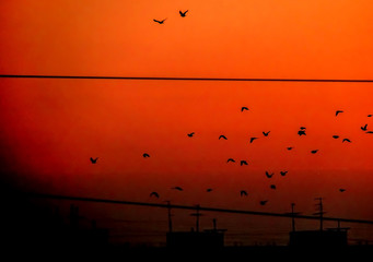 Birds silhouettes on orange sky at sunset
