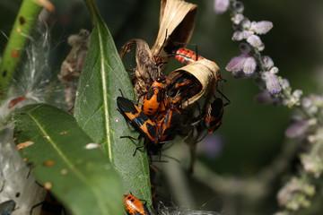 Black and Orange Bugs