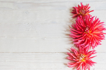 pink dahlia on wooden background