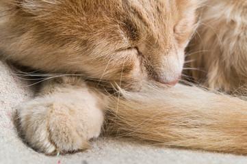Cat sleep in bed