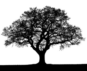 Black and white silhouette of an autumn tree.