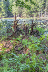 Sullivan County forest