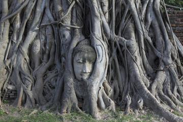 木の中の仏頭 タイ・アユタヤ